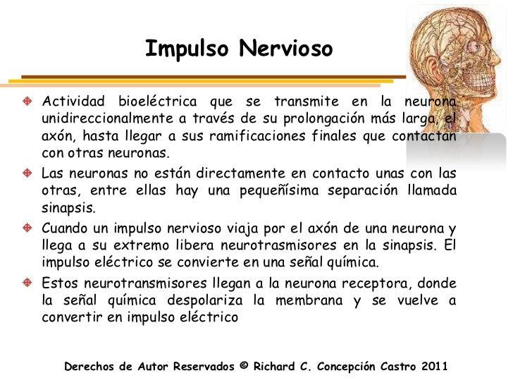 Impulso NerviosoActividad bioeléctrica que se transmite en la neuronaunidireccionalmente a través de su prolongación más l...