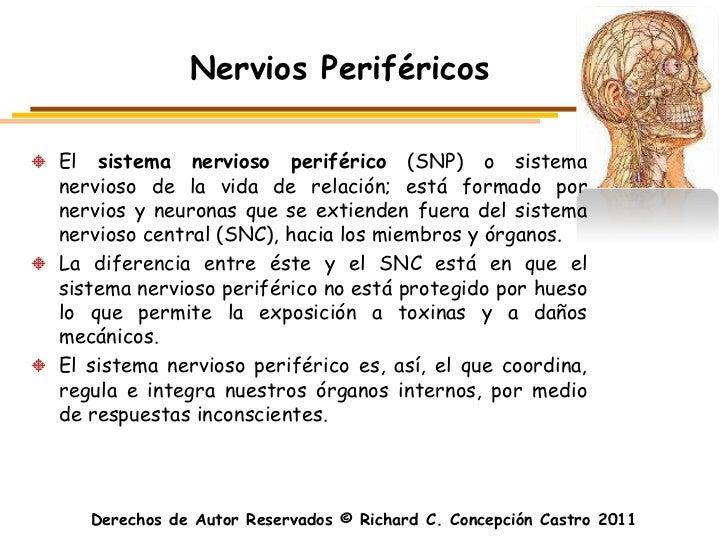 Nervios PeriféricosEl sistema nervioso periférico (SNP) o sistemanervioso de la vida de relación; está formado pornervios ...