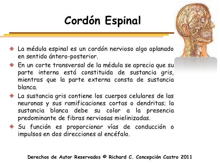 Cordón EspinalLa médula espinal es un cordón nervioso algo aplanadoen sentido ántero-posterior.En un corte transversal de ...