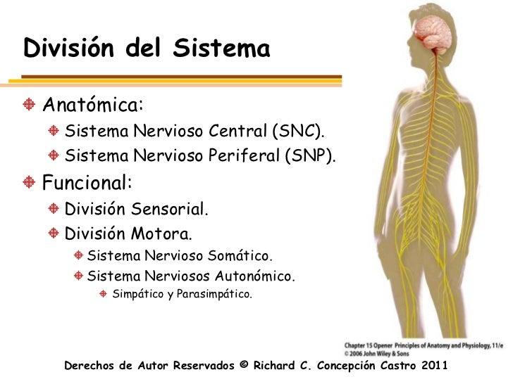 División del Sistema Anatómica:   Sistema Nervioso Central (SNC).   Sistema Nervioso Periferal (SNP). Funcional:   Divisió...