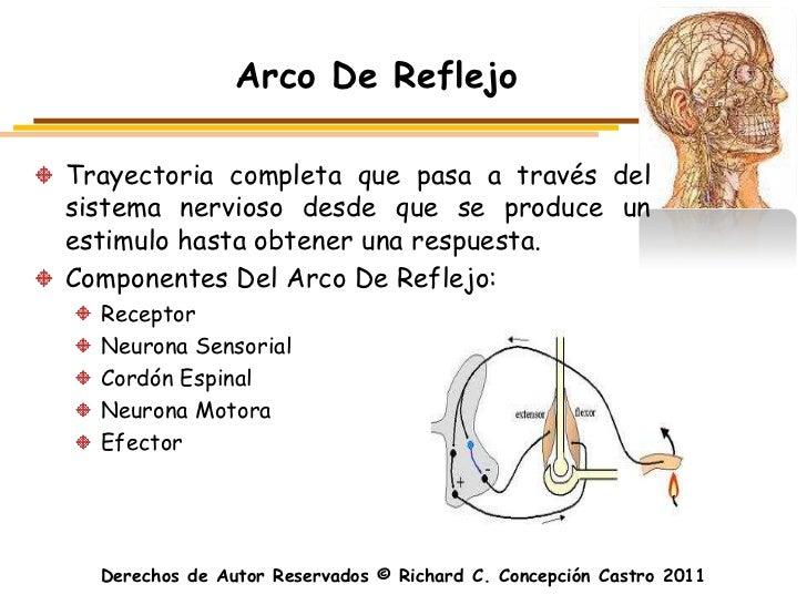 Arco De ReflejoTrayectoria completa que pasa a través delsistema nervioso desde que se produce unestimulo hasta obtener un...