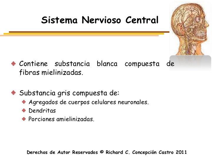 Sistema Nervioso CentralContiene substancia blanca compuesta defibras mielinizadas.Substancia gris compuesta de:  Agregado...