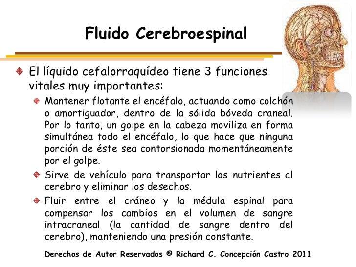 Fluido CerebroespinalEl líquido cefalorraquídeo tiene 3 funcionesvitales muy importantes:  Mantener flotante el encéfalo, ...