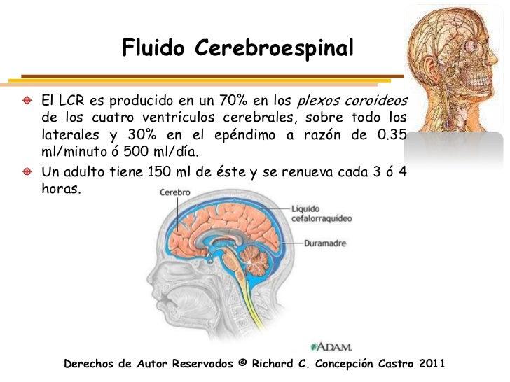Fluido CerebroespinalEl LCR es producido en un 70% en los plexos coroideosde los cuatro ventrículos cerebrales, sobre todo...