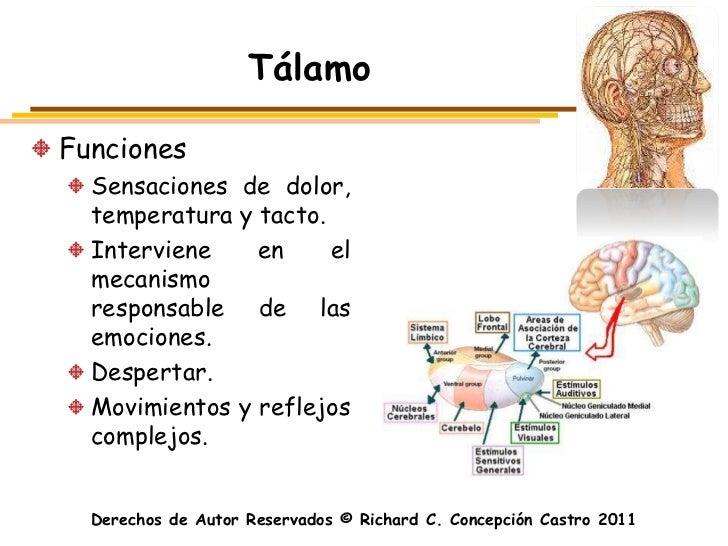 TálamoFunciones  Sensaciones de dolor,  temperatura y tacto.  Interviene    en     el  mecanismo  responsable de las  emoc...