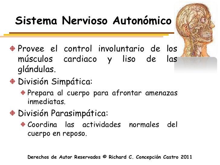 Sistema Nervioso AutonómicoProvee el control involuntario de losmúsculos cardiaco y liso de lasglándulas.División Simpátic...