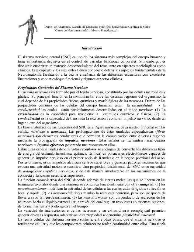 """Depto. de Anatomía, Escuela de Medicina Pontificia Universidad Católica de Chile """"Curso de Neuroanatomía"""". hbravo@med.puc...."""