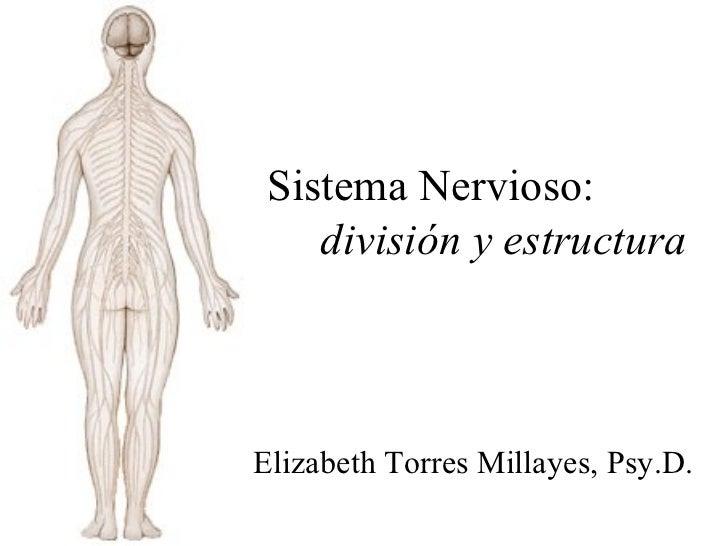 Sistema Nervioso: división y estructura Elizabeth Torres Millayes, Psy.D.