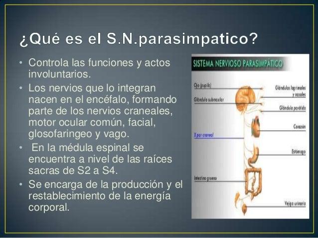 Sistema Nervioso Parasimpatico