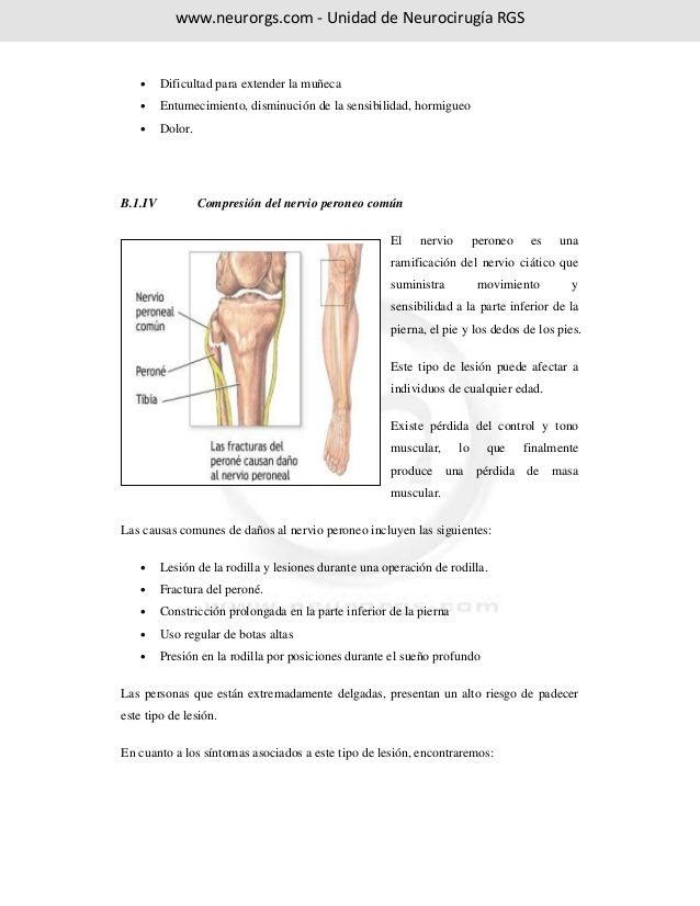 Vistoso Inferior Diagrama De La Anatomía Muscular De La Pierna Molde ...
