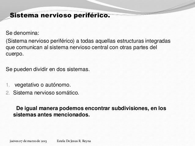 Sistema nervioso periférico