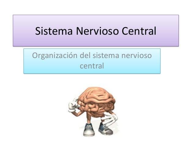 Sistema Nervioso Central Organización del sistema nervioso central