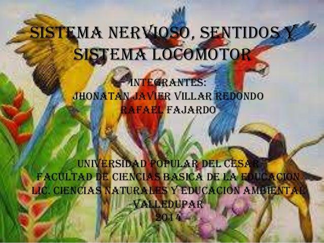 SISTEMA NERVIOSO, SENTIDOS Y SISTEMA LOCOMOTOR INTEGRANTES: JHONATAN JAVIER VILLAR REDONDO RAFAEL FAJARDO UNIVERSIDAD POPU...