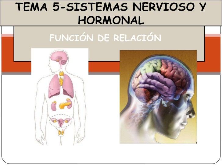 FUNCIÓN DE RELACIÓN  TEMA 5-SISTEMAS NERVIOSO Y HORMONAL