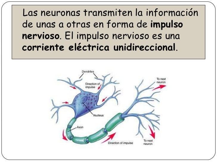 Circuito Nervioso : Sistema nervioso y endocrino