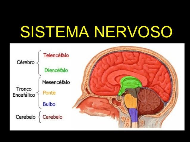 SISTEMA NERVOSO Profª Rosana – Ciências 9º anos A e B
