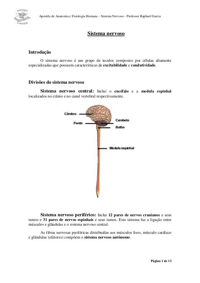 Apostila de Anatomia e Fisiologia Humana – Sistema Nervoso - Professor Raphael Garcia                                     ...