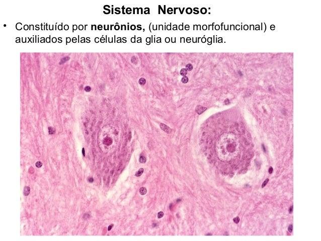 Sistema Nervoso:• Constituído por neurônios, (unidade morfofuncional) eauxiliados pelas células da glia ou neuróglia.