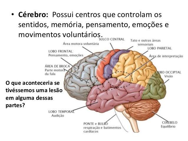 Populares sistema-nervoso-10-638.jpg?cb=  SJ98