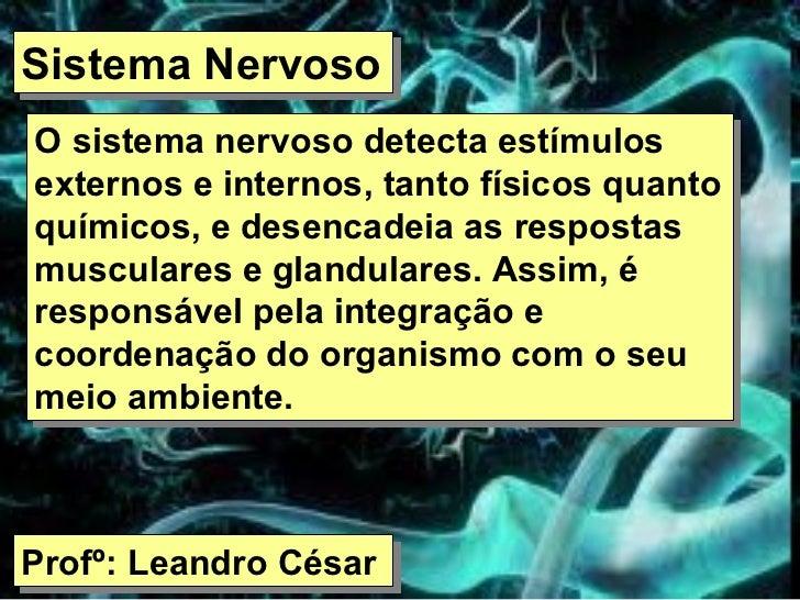 Sistema Nervoso O sistema nervoso detecta estímulos externos e internos, tanto físicos quanto químicos, e desencadeia as r...