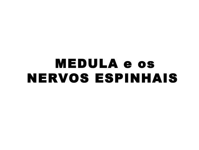 MEDULA e osNERVOS ESPINHAIS