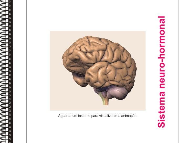 Sistema neuro-hormonal Aguarda um instante para visualizares a animação.