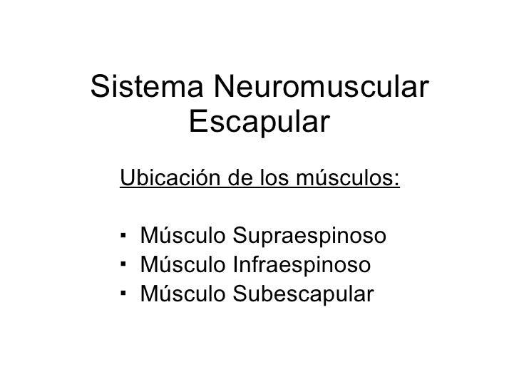 Sistema Neuromuscular Escapular <ul><li>Ubicación de los músculos: </li></ul><ul><li>Músculo Supraespinoso </li></ul><ul><...
