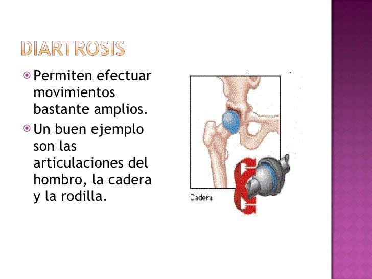 <ul><li>Permiten efectuar movimientos bastante amplios.  </li></ul><ul><li>Un buen ejemplo son las articulaciones del homb...