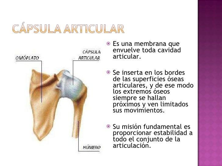 <ul><li>Es una membrana que envuelve toda cavidad articular. </li></ul><ul><li>Se inserta en los bordes de las superficies...