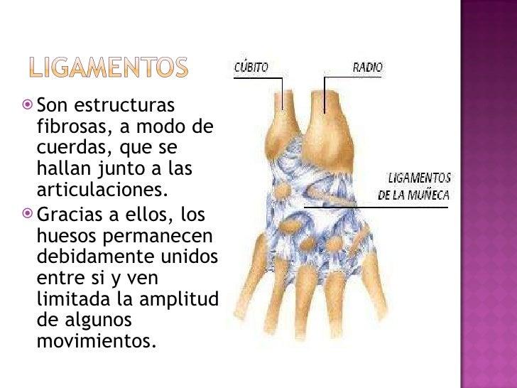 <ul><li>Son estructuras fibrosas, a modo de cuerdas, que se hallan junto a las articulaciones. </li></ul><ul><li>Gracias a...