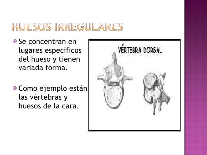 <ul><li>Se concentran en lugares específicos del hueso y tienen variada forma.  </li></ul><ul><li>Como ejemplo están las v...