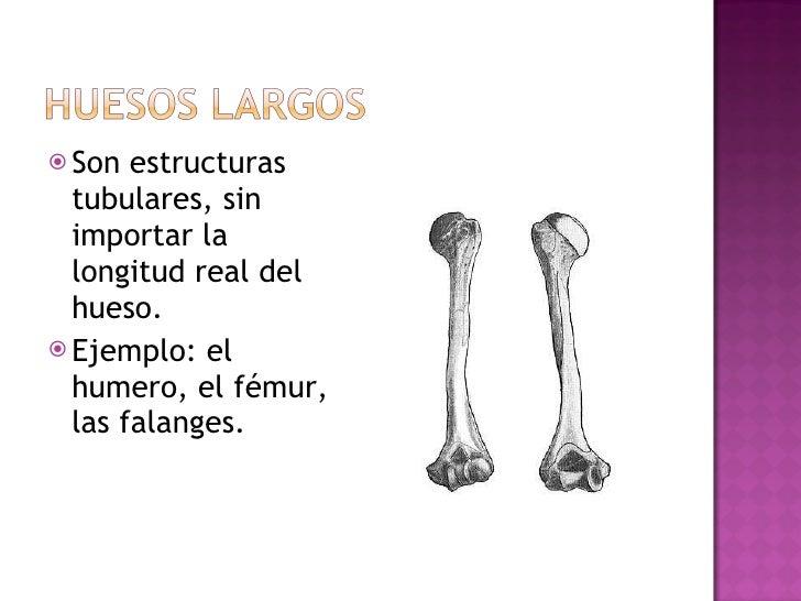 <ul><li>Son estructuras tubulares, sin importar la longitud real del hueso. </li></ul><ul><li>Ejemplo: el humero, el fémur...