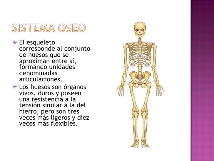 <ul><li>El esqueleto corresponde al conjunto de huesos que se aproximan entre sí, formando unidades denominadas articulaci...
