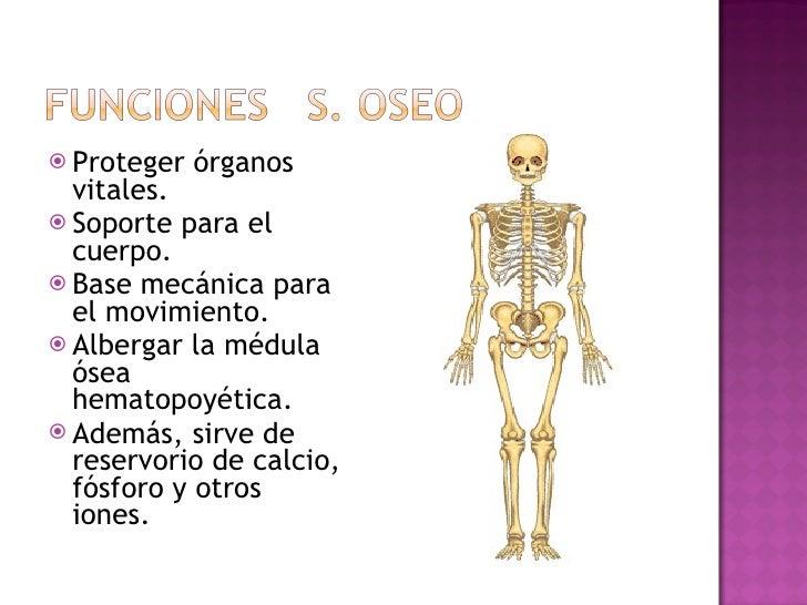 <ul><li>Proteger órganos vitales. </li></ul><ul><li>Soporte para el cuerpo. </li></ul><ul><li>Base mecánica para el movimi...