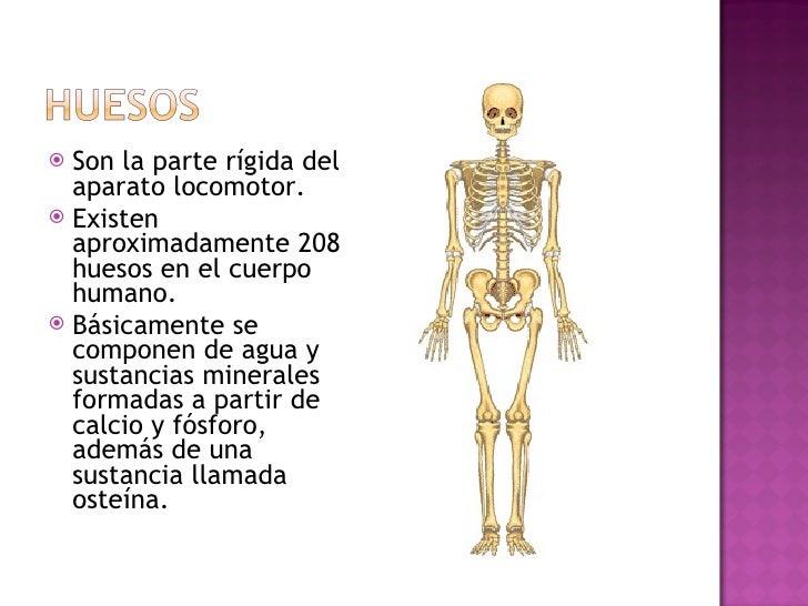 <ul><li>Son la parte rígida del aparato locomotor.  </li></ul><ul><li>Existen aproximadamente 208 huesos en el cuerpo huma...