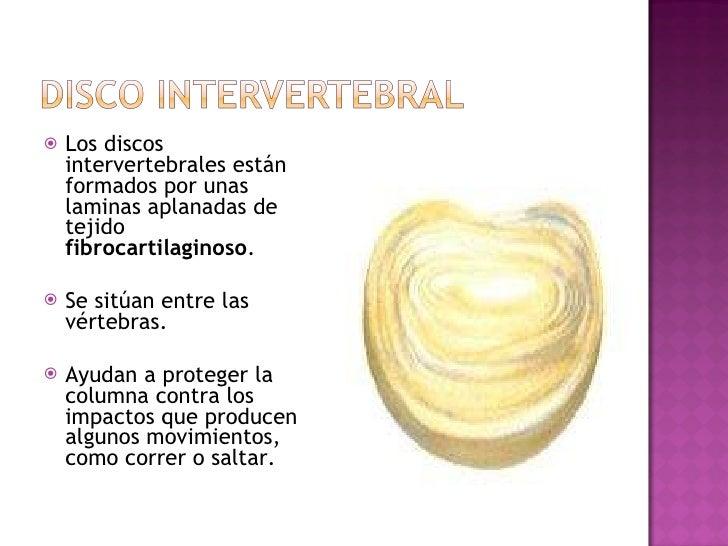 <ul><li>Los discos intervertebrales están formados por unas laminas aplanadas de tejido  fibrocartilaginoso .  </li></ul><...