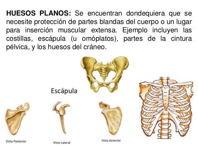 Cuales son los huesos planos pictures to pin on pinterest for Clasificacion de los planos arquitectonicos