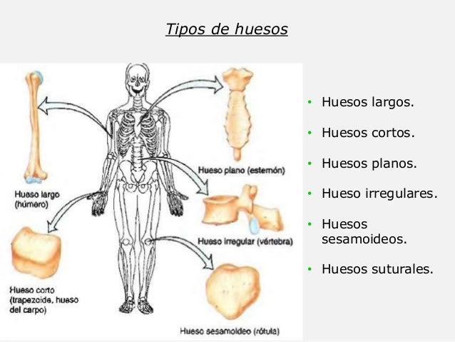 Sistema óseo. Anatomía. Fracturas. Radiología.