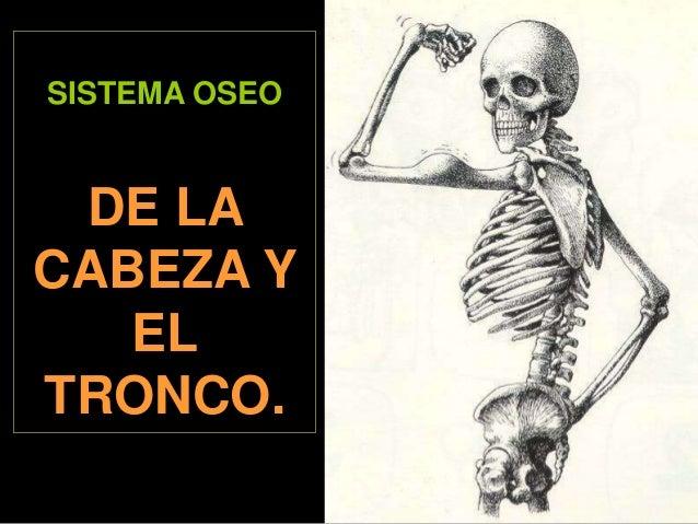 SISTEMA OSEO  DE LA CABEZA Y EL TRONCO.