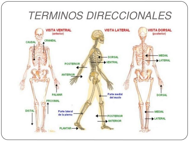 Sistema Osteo Artromuscular