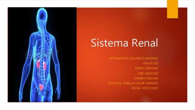 sistema-renal-1-638.jpg?cb=1468121757