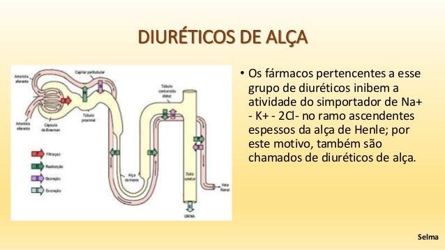 Sistema renal e os diur ticos que afetam a fun o renal for Grupo alca