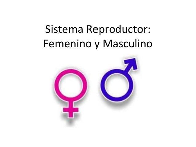 Sistema Reproductor:Femenino y Masculino