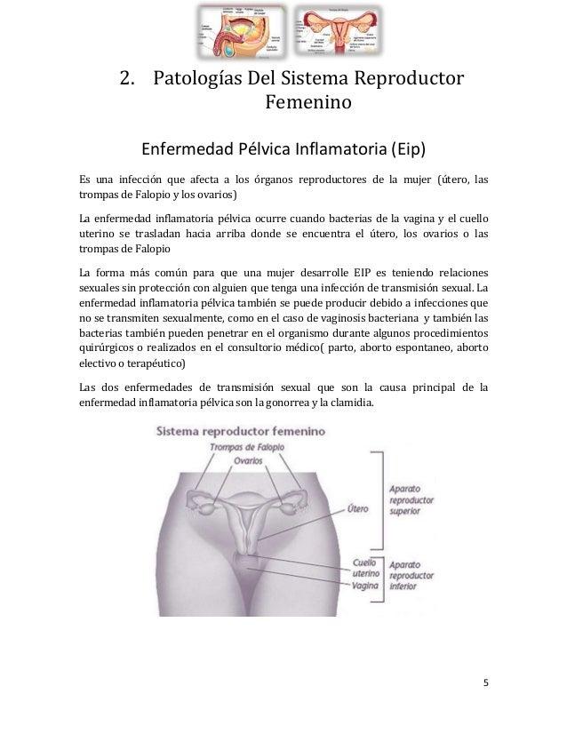 Sistema Reproductor, Patologias e Intervenciones Quirurgicas.