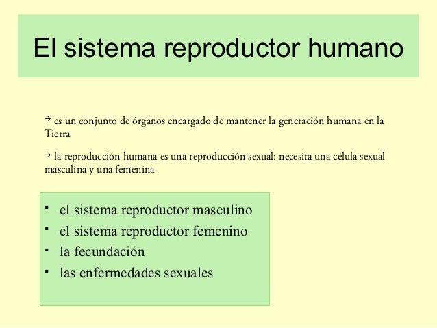 El sistema reproductor humano  es un conjunto de órganos encargado de mantener la generación humana en la Tierra  la rep...