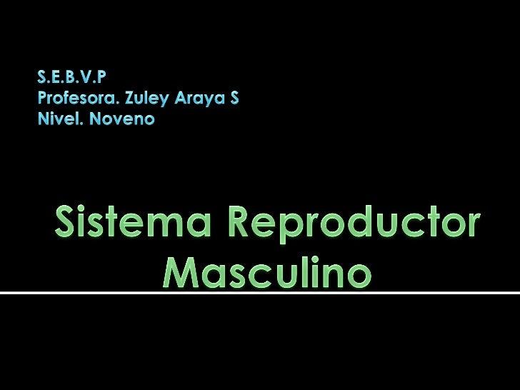 Produce     los    gametos  masculinos(espermatozoides) y los deposita en elcuerpo de la mujer