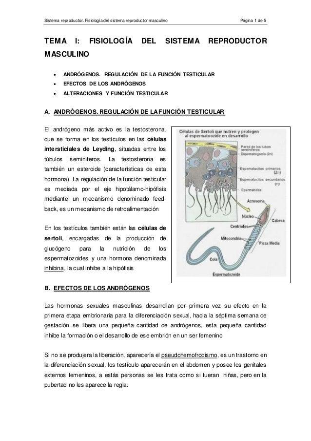 Sistema reproductor. Fisiología del sistema reproductor masculino Página 1 de 5 TEMA I: FISIOLOGÍA DEL SISTEMA REPRODUCTOR...