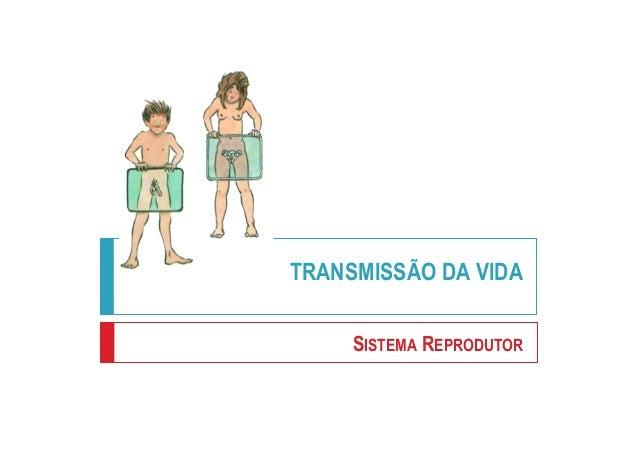 TRANSMISSÃO DA VIDA SISTEMA REPRODUTOR