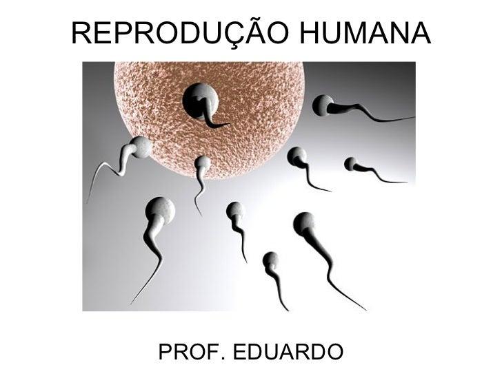 REPRODUÇÃO HUMANA    PROF. EDUARDO