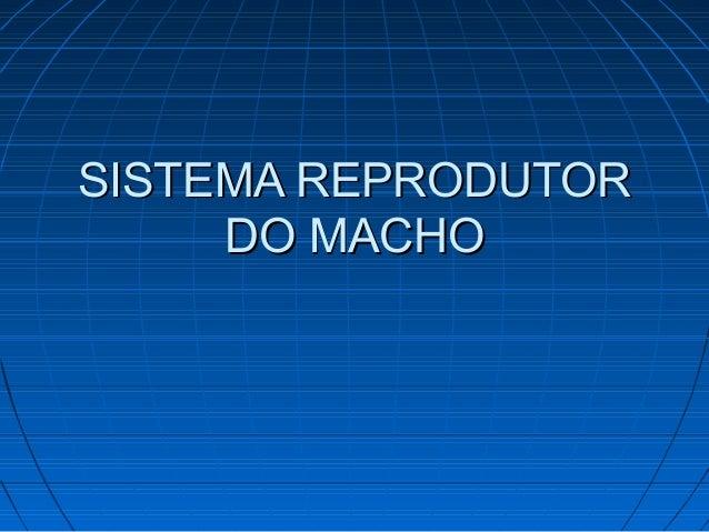 SISTEMA REPRODUTORSISTEMA REPRODUTOR DO MACHODO MACHO